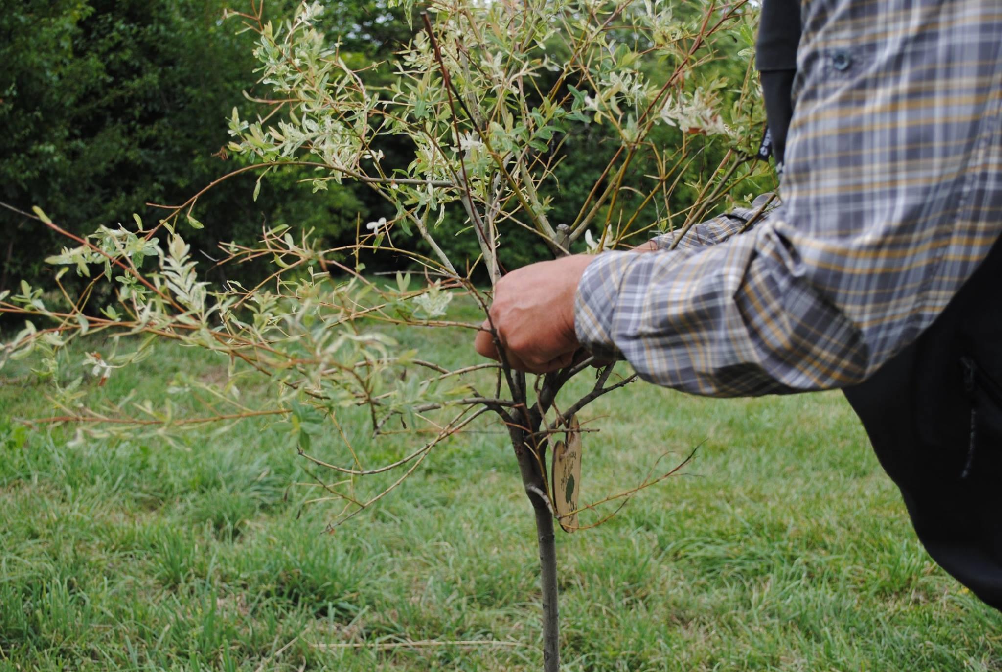 На Коломийщині планують посадити ліс на 33 гектарах