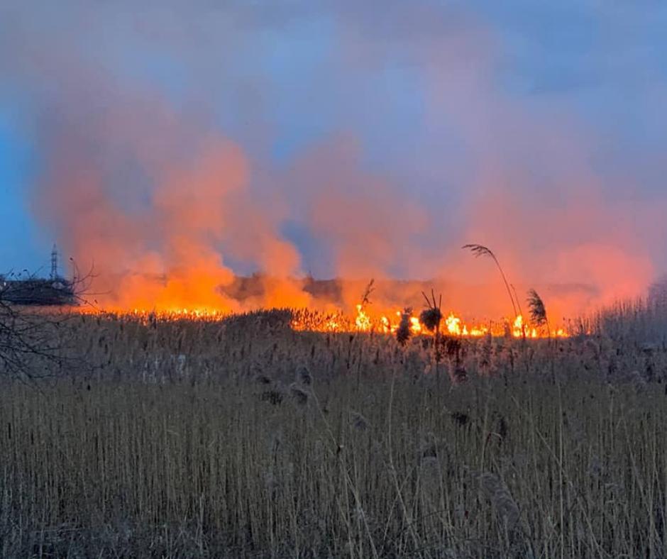 Підпали сухостою: про шкоду довкіллю, альтернативи та як діяти